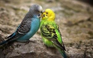 Best-Birds-Love-Desktop-Wallpapers
