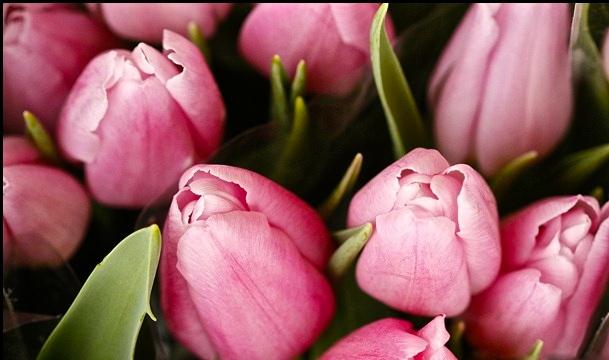 feb flowers 065_thumb[2]
